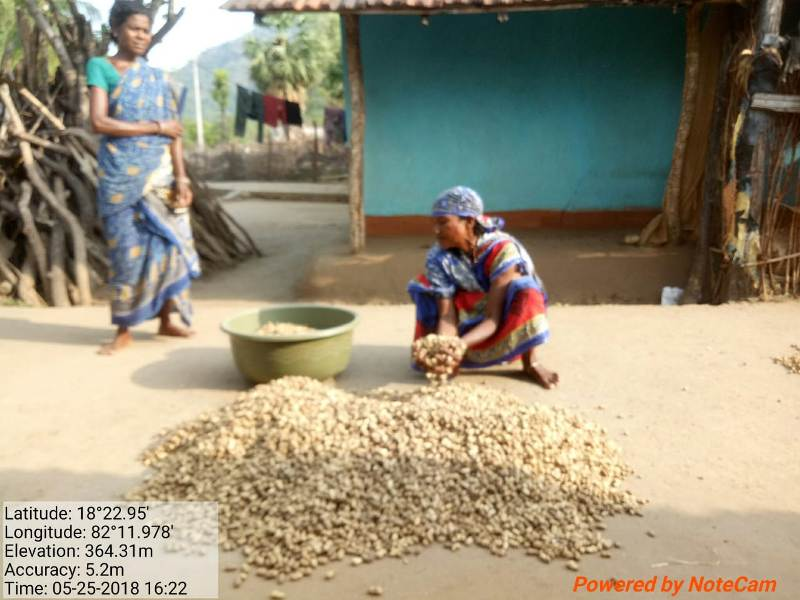 Women are engaged in groundnut drying, after harvest supported by DDA 02.jpe