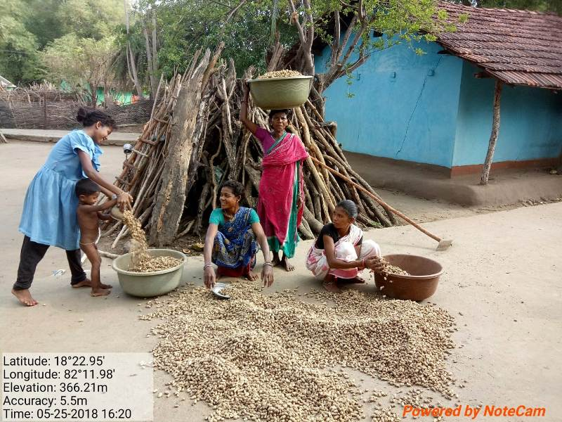 Women are engaged in groundnut drying, after harvest supported by DDA 04.jpe